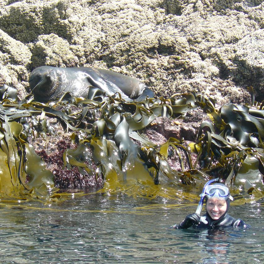 Плавание с морскими котиками, Кайкоура. Экскурсии в Новой Зеландии.