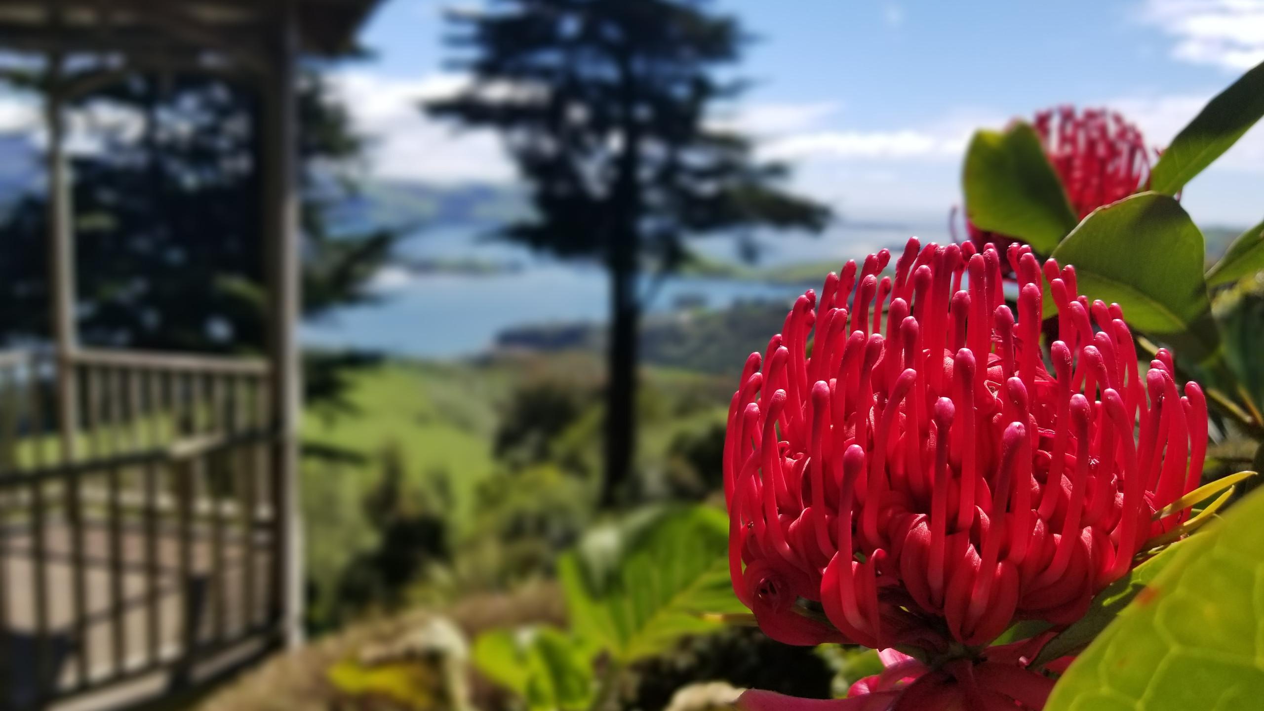Larnach castle gardens, New Zealand travel blog, New Zealand tours