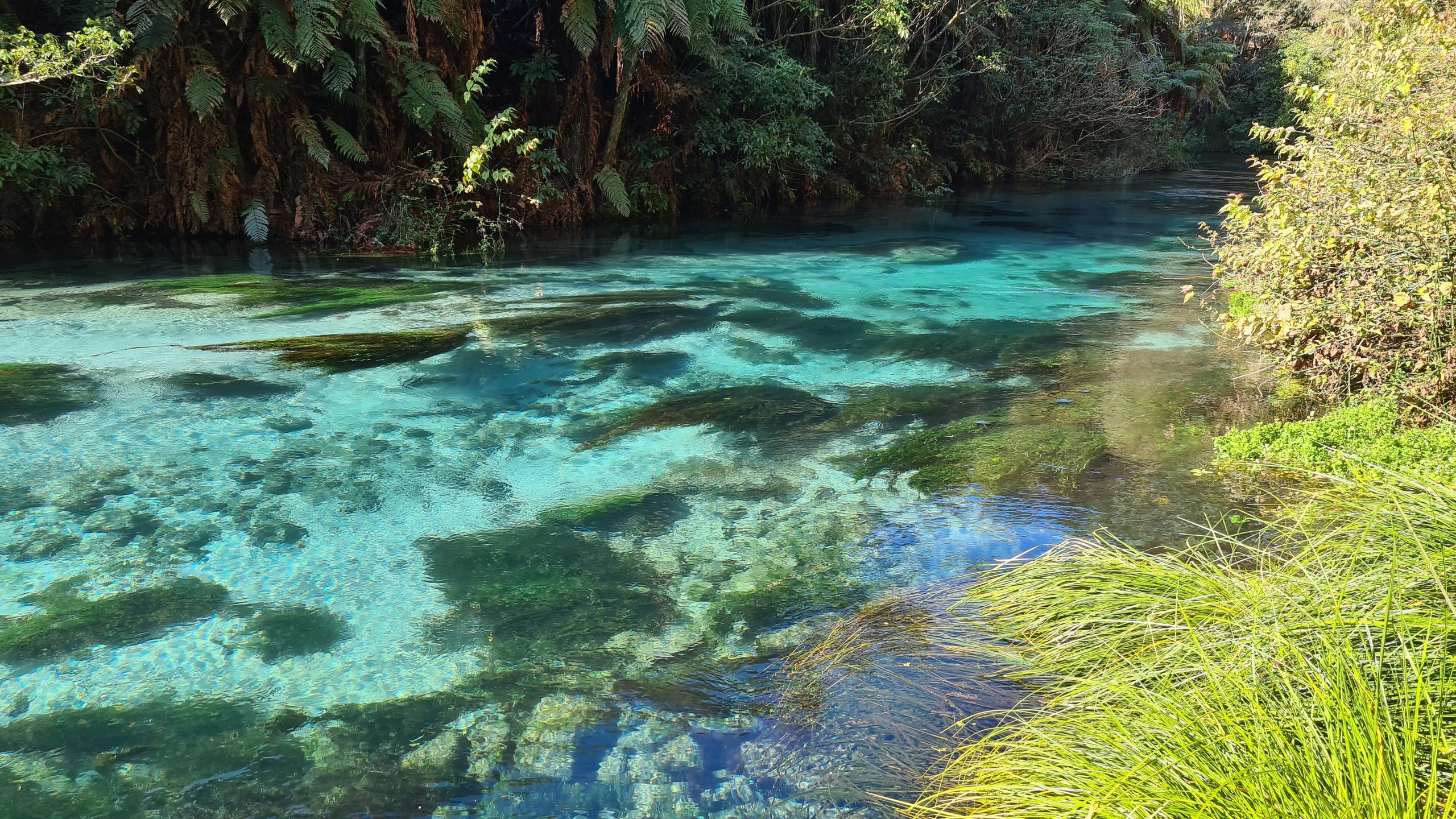 Голубой источник Зеландия