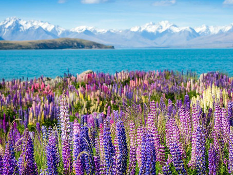 19 Days on North and South Islands of New Zealand