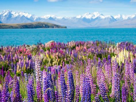 19 дней на Северном и Южном островах Новой Зеландии