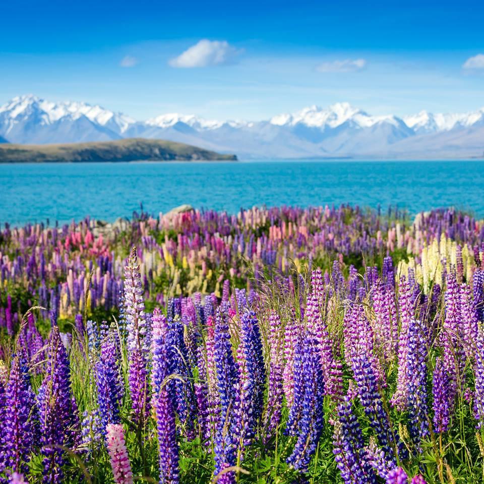 Озеро Текапо Новая Зеландия