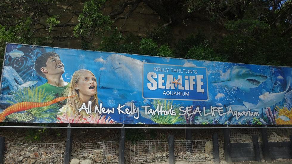 Океанариум, Окленд, Новая Зеландия. Туры в Новую Зеландию. Экскурсии в Новой Зеландии.