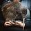 Kiwi Bird Te Puia Rotorua New Zealand