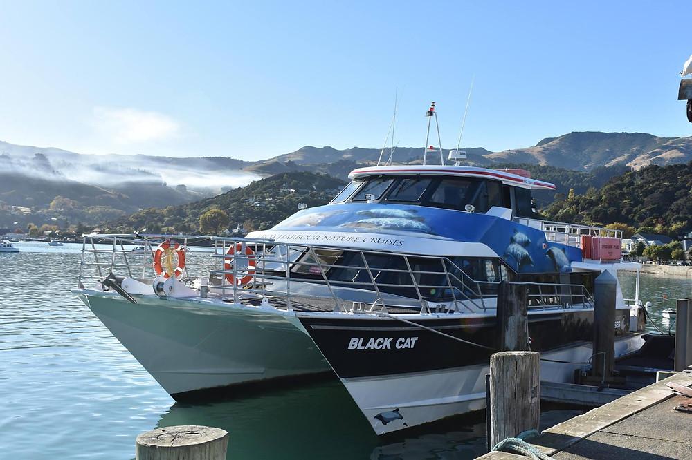 Black Cat Akaroa cruise, New Zealand