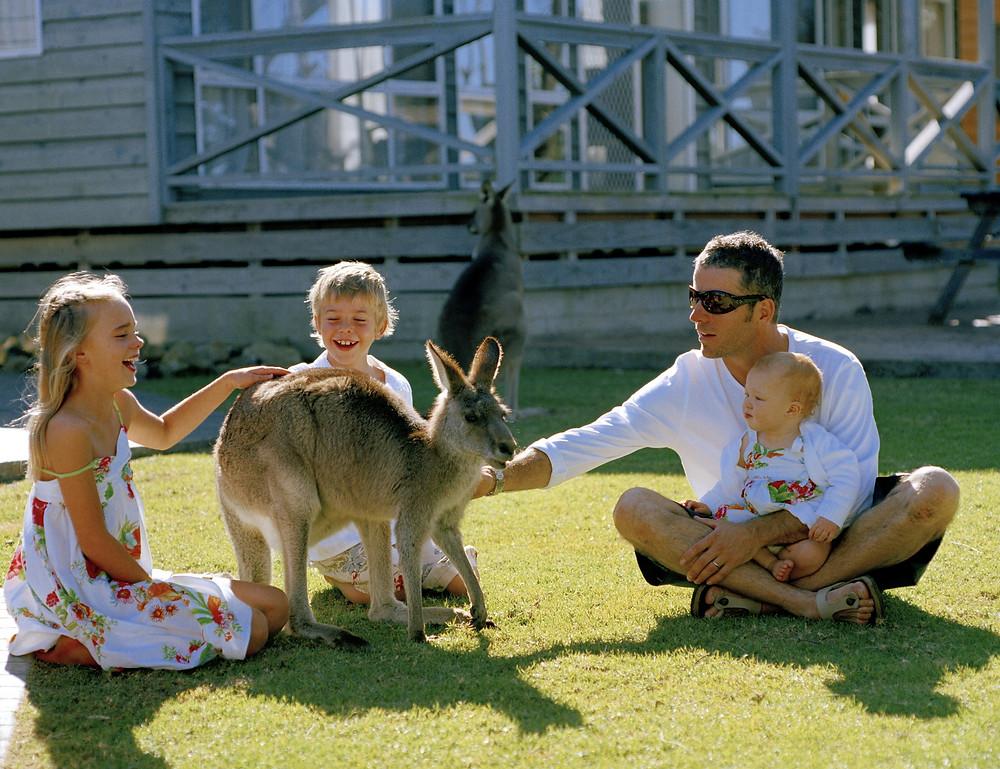 Кенгуру в Австралии. Тур в Австралию и Новую Зеландию.