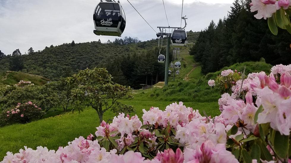 Небесная гондола, Роторуа, Новая Зеландия. Туры в Новую Зеландию. Гид в Новой Зеландии.