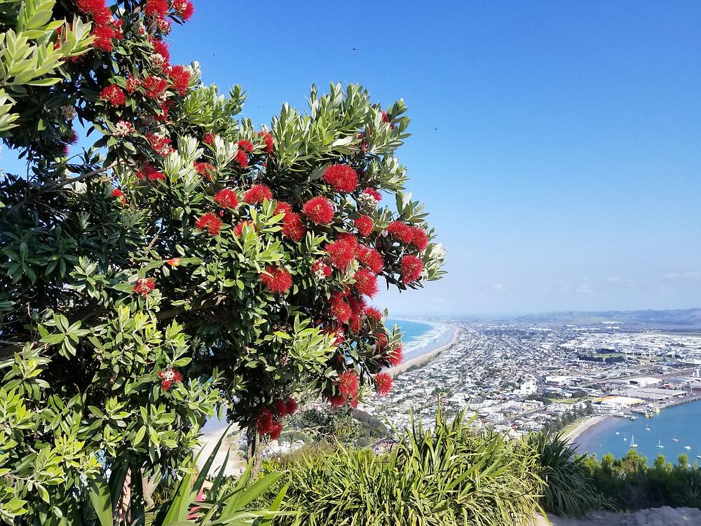Вид с горы Маунгануй, Новая Зеландия. Туры в Новую Зеландию. Гид в Новой Зеландии.