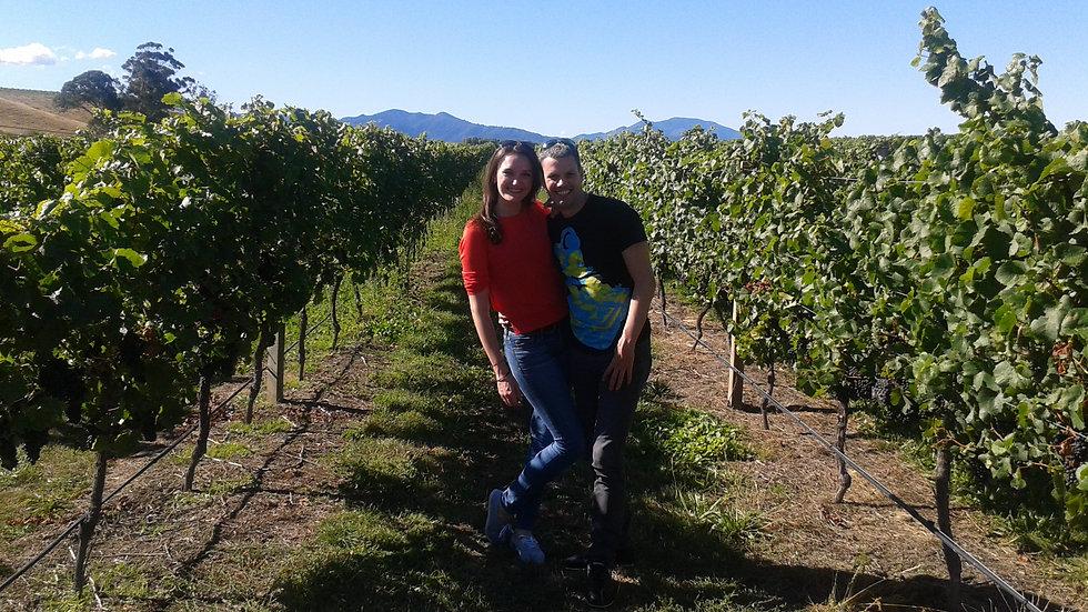 Wine Tour ex Picton or Blenheim