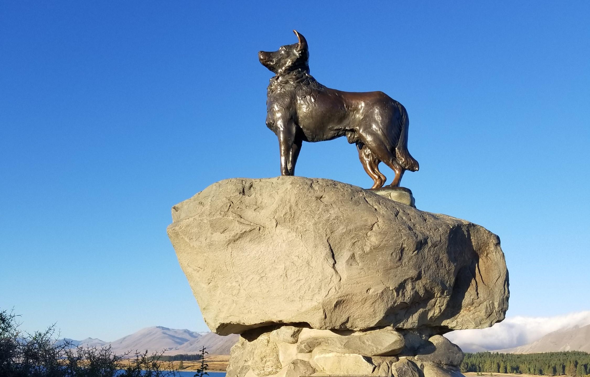 Dog monument, Tekapo, New Zealand activities, New Zealand tours