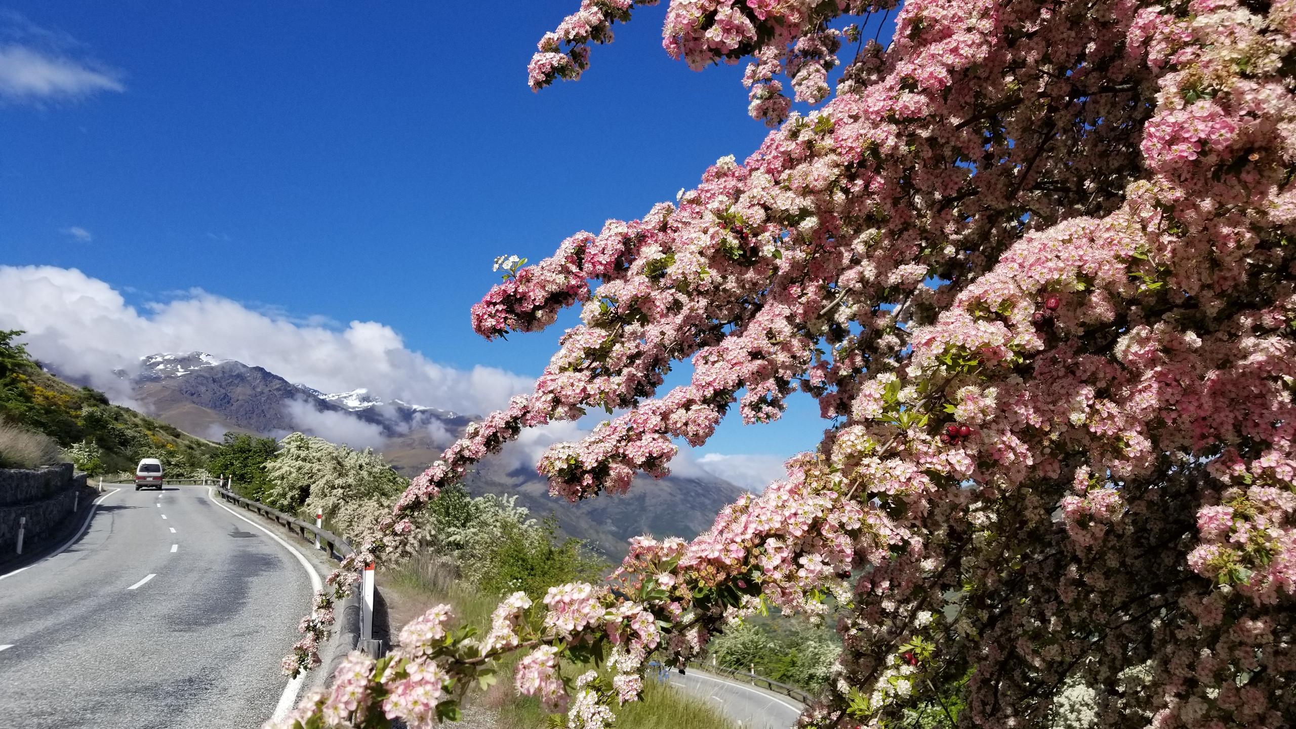 Цветы Новая Зеландия