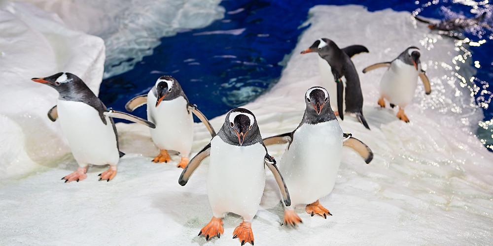 Пингвины в океанариуме Келли Тарлтон. Групповой тур в Новую Зеландию.