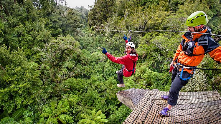 Зиплайн под кронами деревьев, Роторуа, Новая Зеландия, туры в Новую Зеландию