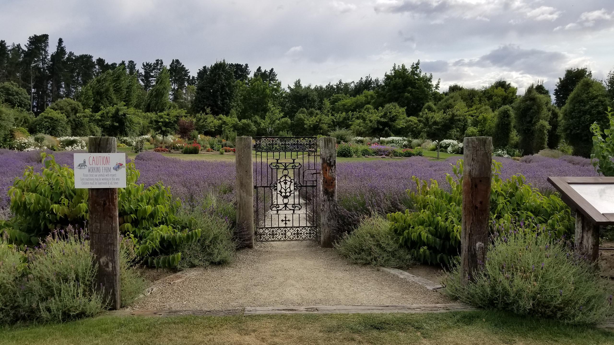 Lavender farm Wanaka, New Zealand activities, New Zealand tours