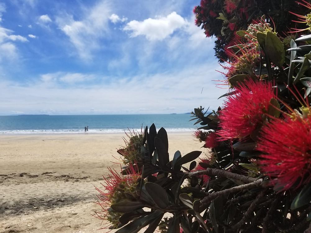 Окленд, Новая Зеландия. Туры в Новую Зеландию.