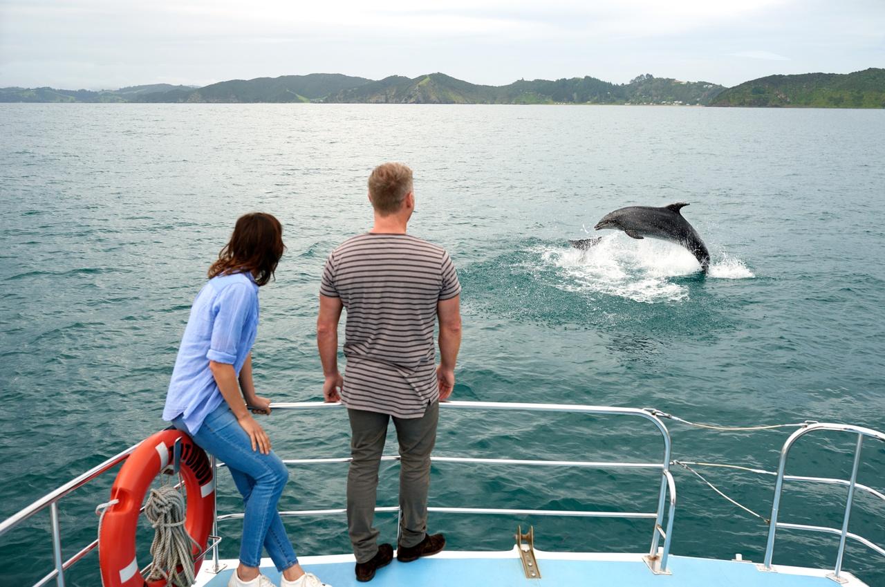 Dolphin, Bay of Islands, New Zealand attractions, New Zealand activities