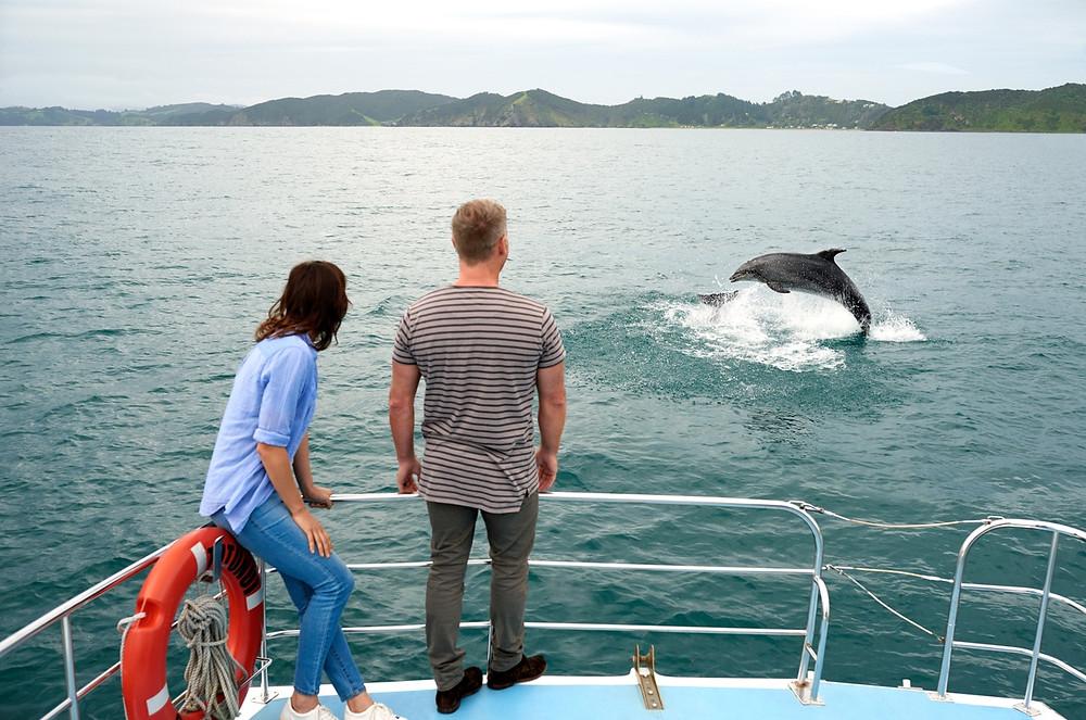 наблюдение за дельфинами в Заливе Островов, Новая Зеландия. Туры в Новую Зеландию.