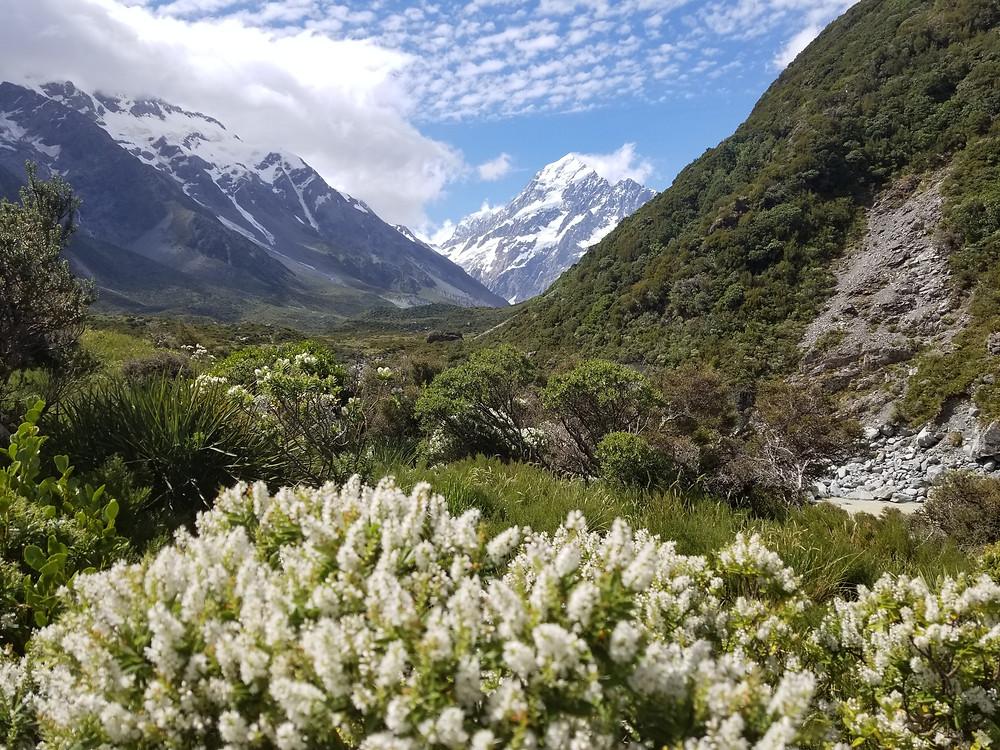 Гора Кука, Новая Зеландия. Туры в Новую Зеландию. Гид в Новой Зеландии.