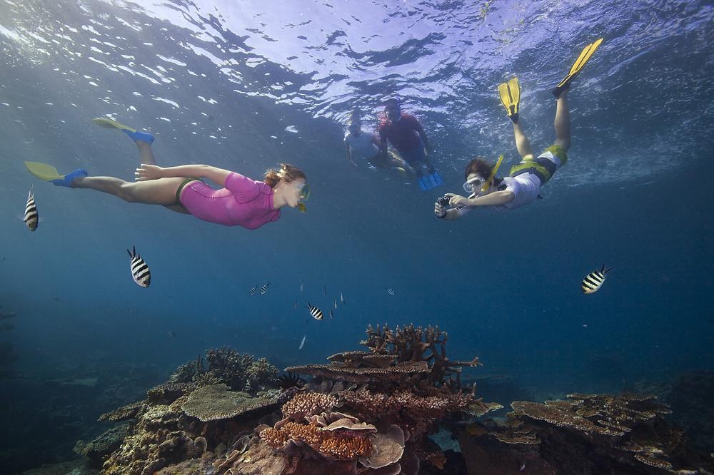 Снорклинг на Большом Барьерном Рифе, Австралия. Тур в Австралию и Новую Зеландию.
