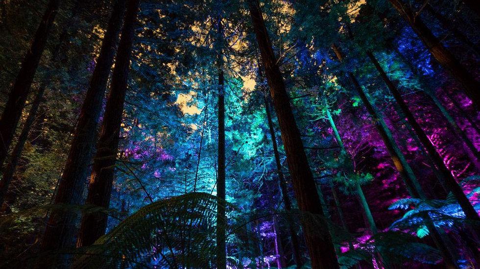 Redwoods Treewalk Rotorua Night Experience