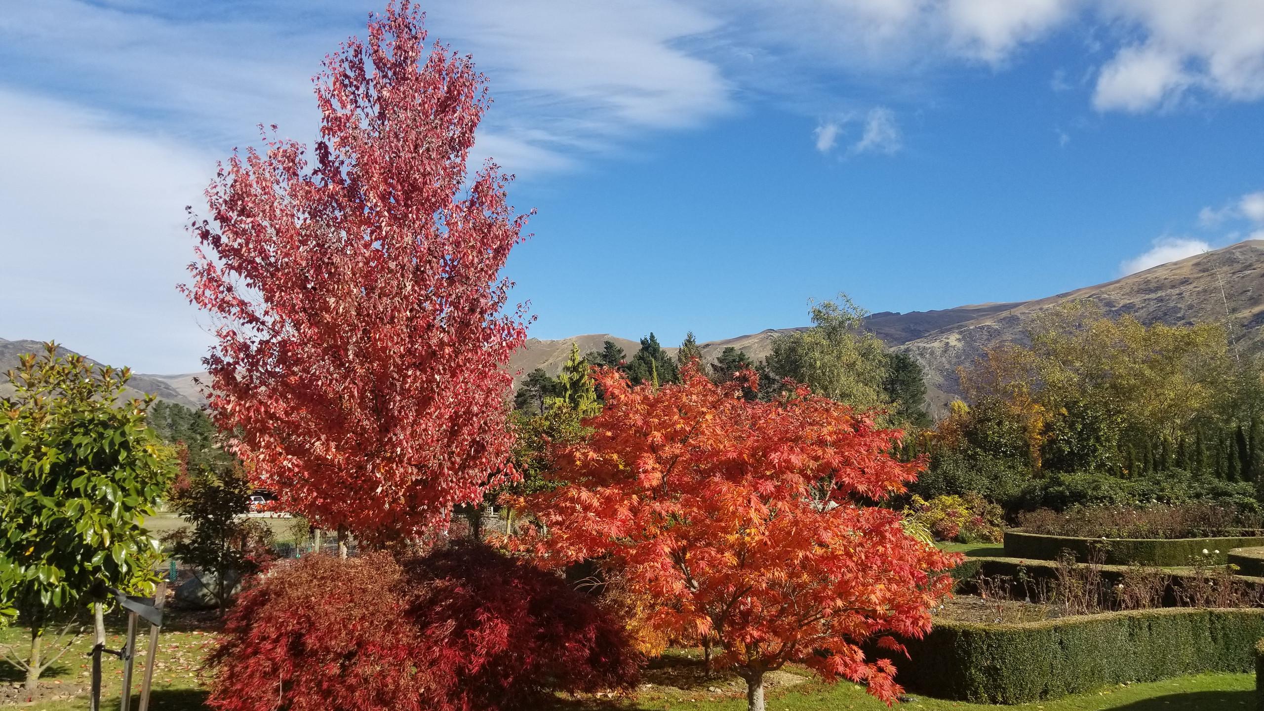 Осень, Новая Зеландия