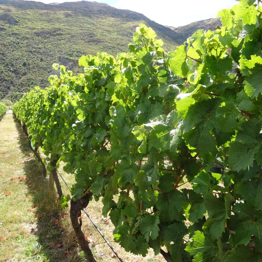Napier Wine Tour