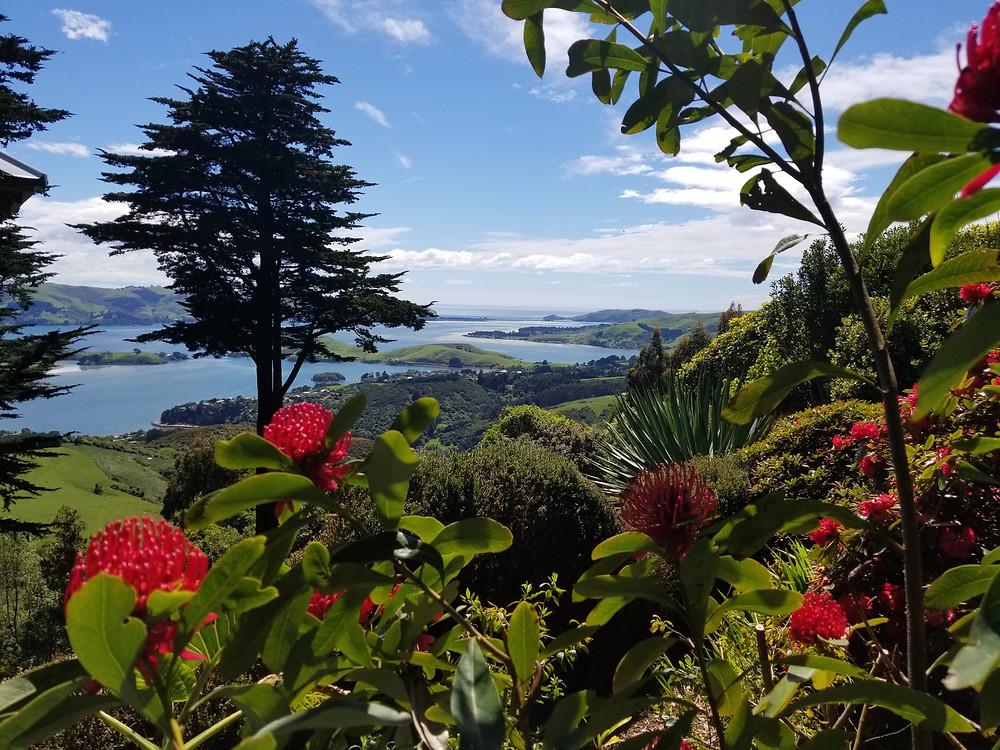 Замок Ларнак, Данидин, Новая Зеландия, туры в Новую Зеландию