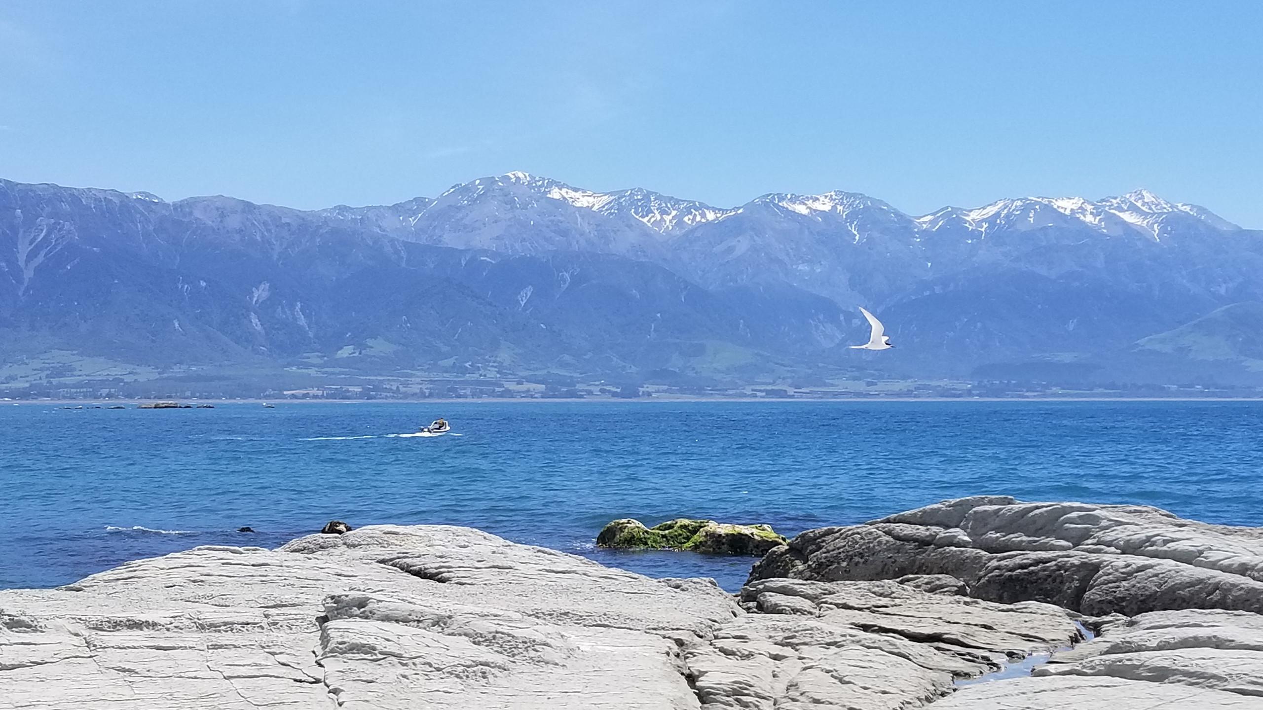 Kaikoura, New Zealand activities, New Zealand tours