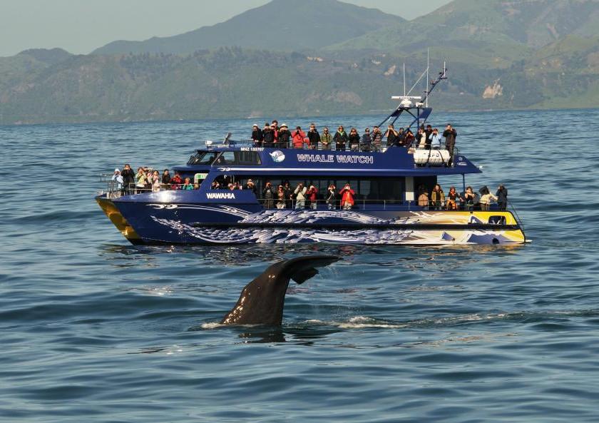 Наблюдение за китами с яхты, Кайкоура. Экскурсии в Новой Зеландии.