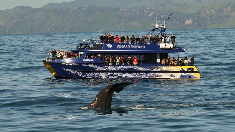 Наблюдение за китами с яхты, Кайкоура, Новая Зеландия. Туры в Новую Зеландию. Экскурсии в Новой Зеландии.