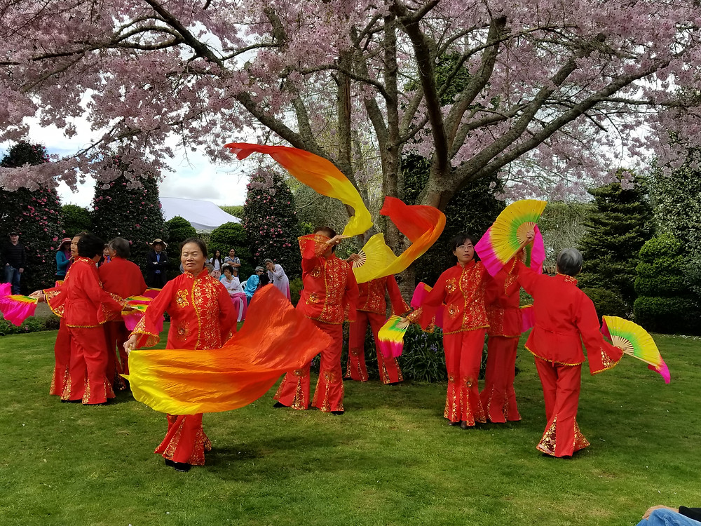 Waikato Cherry Tree Festival, festivals in New Zealand