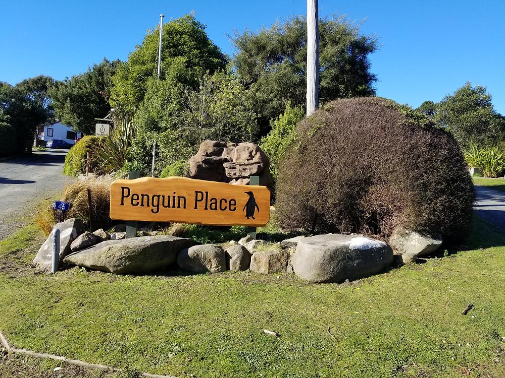 Заповедник пингвинов в Данидине Новая Зеландия. Туры в Новую Зеландию. Экскурсии в Новой Зеландии.