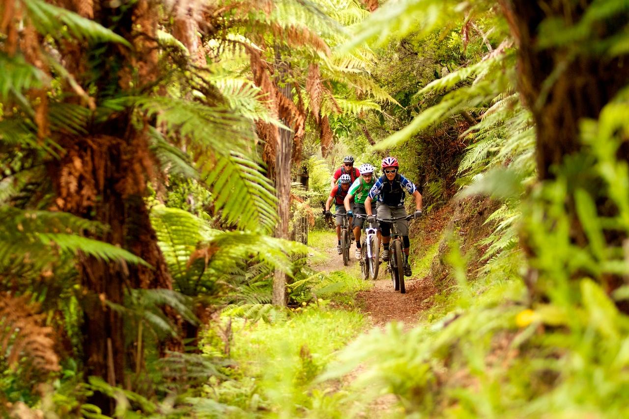 Mountain biking in Taupo, New Zealand activities, New Zealand attractions