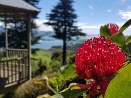 15 дней, Окленд - Квинстаун по восточному побережью Южного острова
