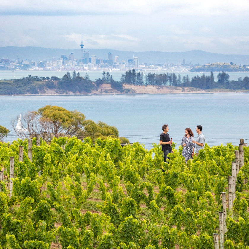 Wineries on Waiheke island, New Zealand activities, tours of New Zealand