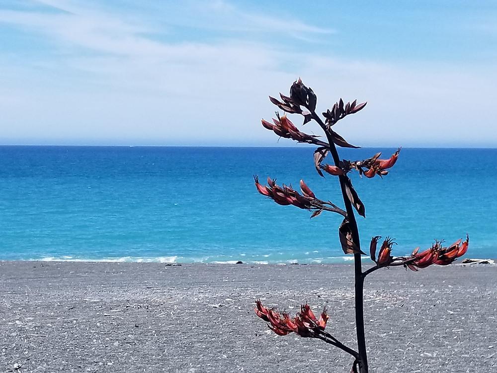 море в Новой Зеландии