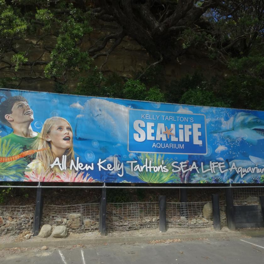 Auckland City Sights and Kelly Tarlton's Aquarium