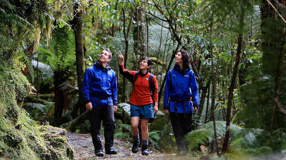 Пешая экскурсия к леднику Франца Иосифа, Новая Зеландия. Туры в Новую Зеландию. Экскурсии в Новой Зеландии.