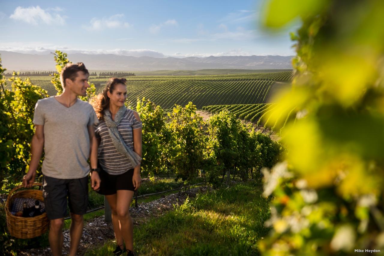 Winery in Marlborough, New Zealand activities, New Zealand tours