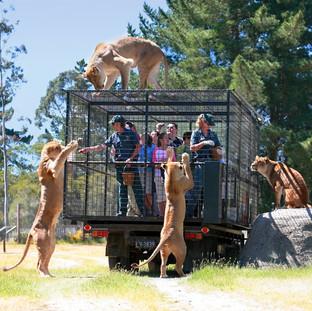 Парк диких животных Орана, Крайстчерч