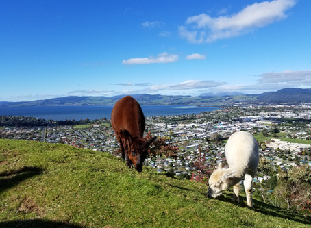 14 days, Auckland - Queenstown, North & South islands of New Zealand