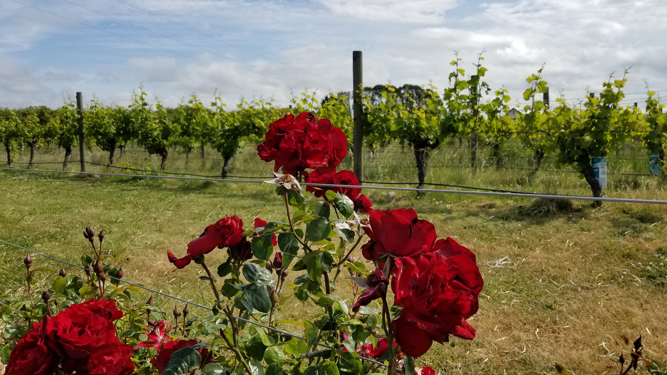 wine in New Zealand, New Zealand travel blog
