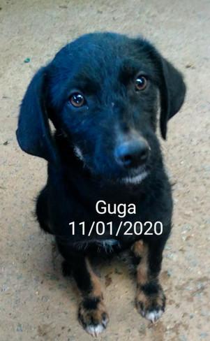 GUGA - JAN 2020
