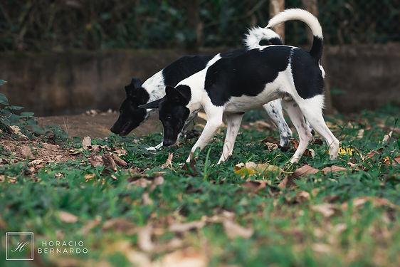 DogsHeaven-2970.jpg