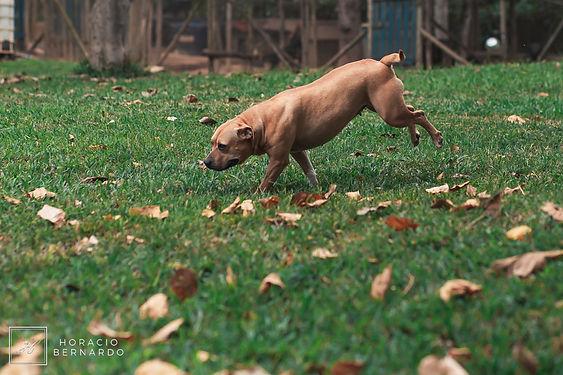 DogsHeaven-3001.jpg