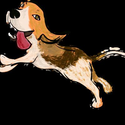Novo site da Dog's Heaven