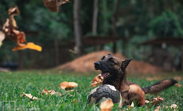 DogsHeaven-3284.jpg