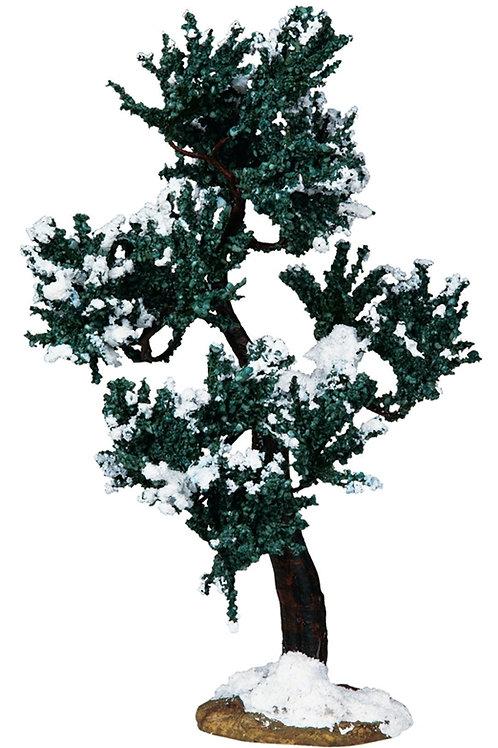 Winter mulberry tree