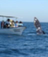 Whale 6_edited.jpg