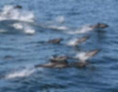 Dolphin 8.jpg